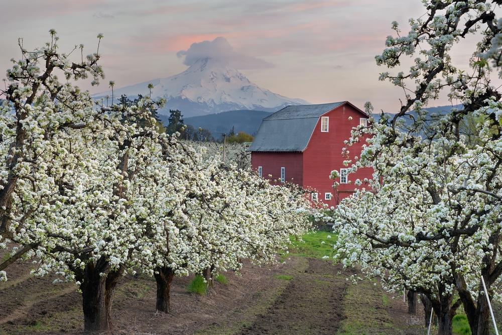 Red Barn in Hood River, Oregon